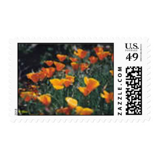 California Poppies Stamps