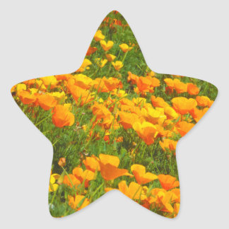 California Poppies Star Sticker