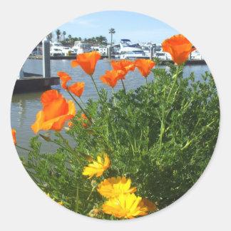 California poppies Stickers