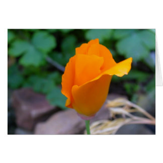 California Poppy 2 Card