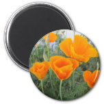California Poppy 2 Inch Round Magnet