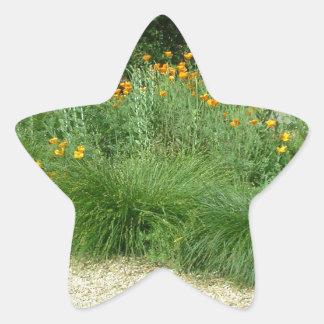 California Poppy #5 Star Sticker