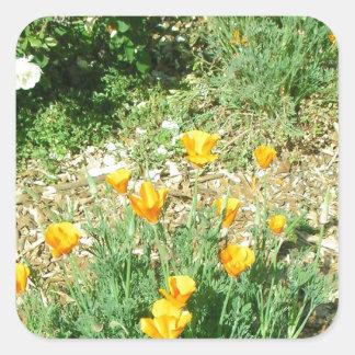 California Poppy #6 Square Sticker