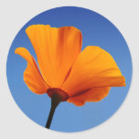 California Poppy Against Blue Sky Classic Round Sticker
