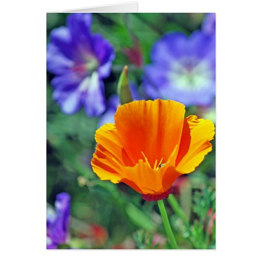 California Poppy and Purple Blooms Greeting Card