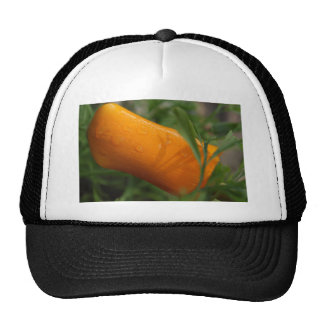 California Poppy bud Trucker Hat