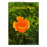 California Poppy California Products Card