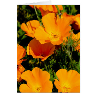 """California Poppy"" Card"
