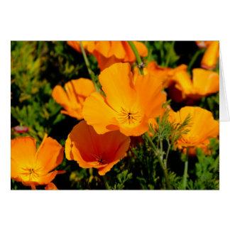 """California Poppy"" Card"
