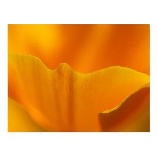 California Poppy Close-Up Post Cards