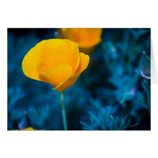California Poppy Dreams Card