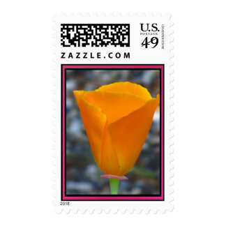 California Poppy Flower Postage Stamps