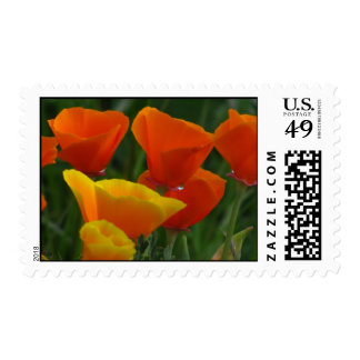 California Poppy Flowers Stamp
