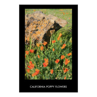 California Poppy Flowers Poster,Print Poster