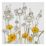 California Poppy Flowers Wildflower Drawing Poster