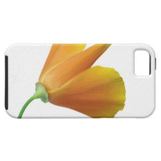 California poppy iPhone SE/5/5s case