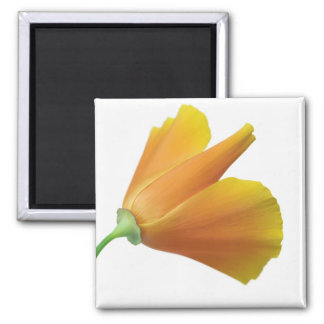California poppy fridge magnet