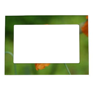 California Poppy Magnetic Picture Frame