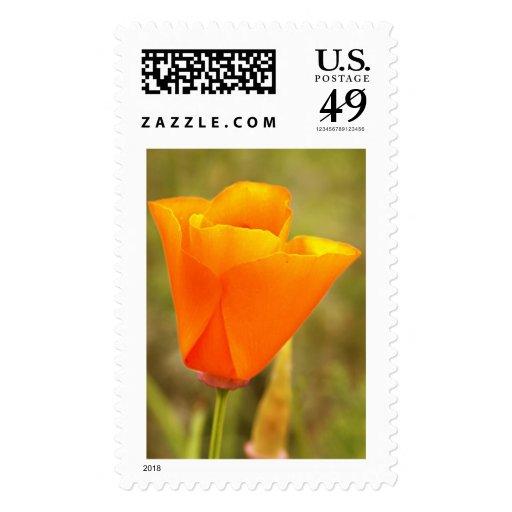 California Poppy Postage Stamps