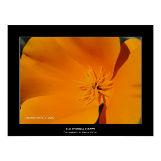 """California Poppy"" Poster"