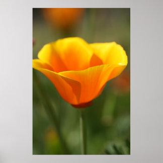 California Poppy Print