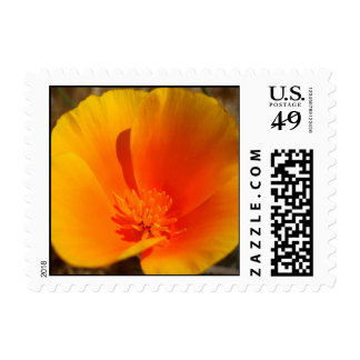California Poppy small stamps