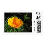 California Poppy (State Flower) Postage Stamp