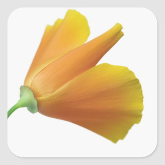 California poppy square stickers