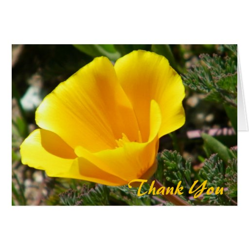 California Poppy Thank You Card