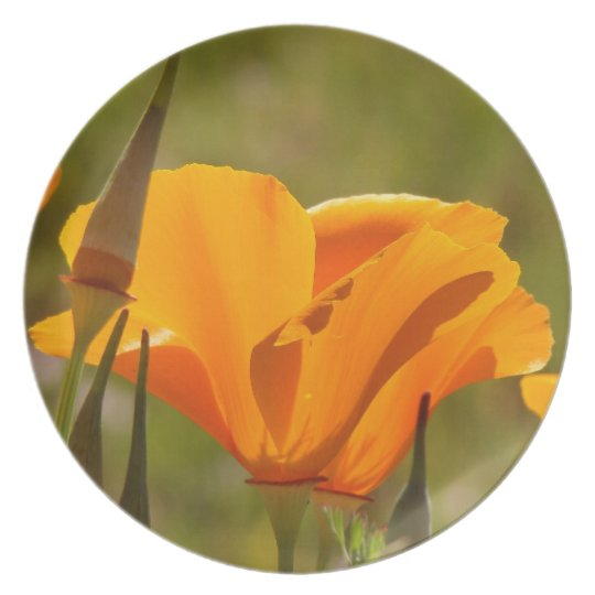 California Poppy Wildflower Flowers Floral Meadow Melamine Plate