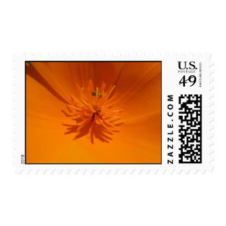 California Poppy with Bee Stamp