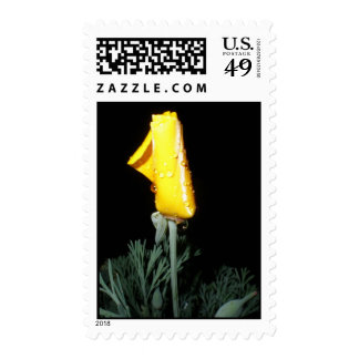California Poppy with Water Drops Postage Stamp