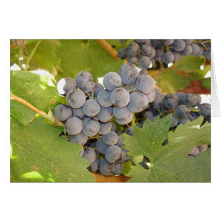 California Purple Grapes on the Vine Card