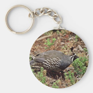 California quail basic round button keychain
