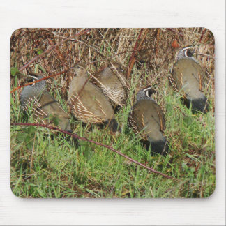 California Quail Birds Wildlife Animal Photography Mouse Pad
