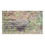California quail business card