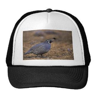 California Quail Trucker Hat