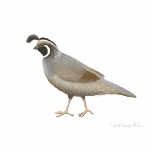California Quail Holiday Ornament Cut Outs