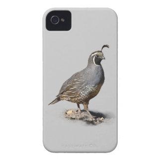 CALIFORNIA QUAIL iPhone 4 Case-Mate CASE