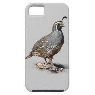 CALIFORNIA QUAIL iPhone 5 CASES