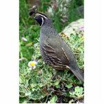 California quail photo sculptures