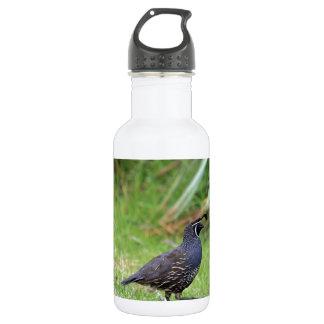California quail stainless steel water bottle