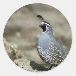 California quail stickers