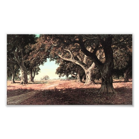 California Ranch by William Keith (Modified) Photo Print
