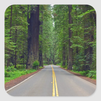California redwood forest highway image square sticker