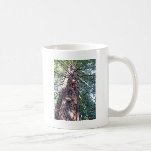 California Redwood Upshot Classic White Coffee Mug