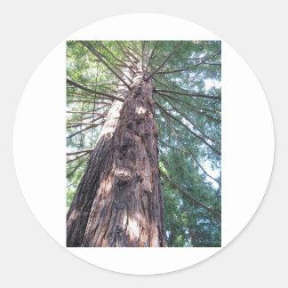California Redwood Upshot Sticker