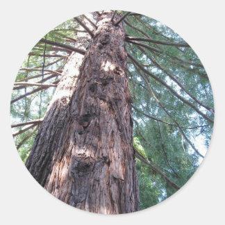 California Redwood Upshot Round Sticker