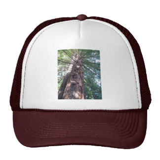 California Redwood Upshot Trucker Hat
