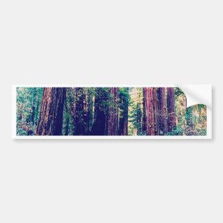 California Redwoods Bumper Sticker